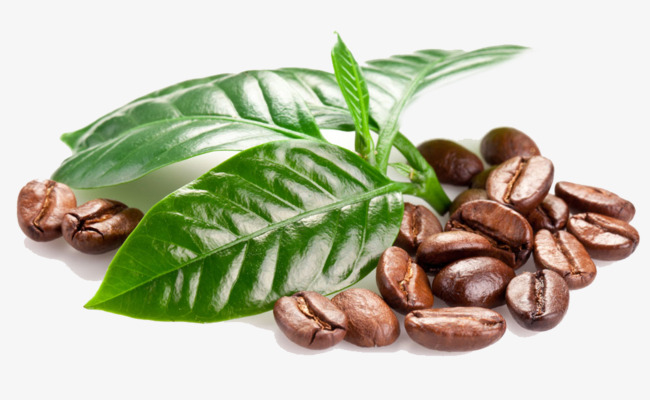 Study: All Arabica derived from a single ancestral plant Update to Coffea Arabica Genetic Diversity